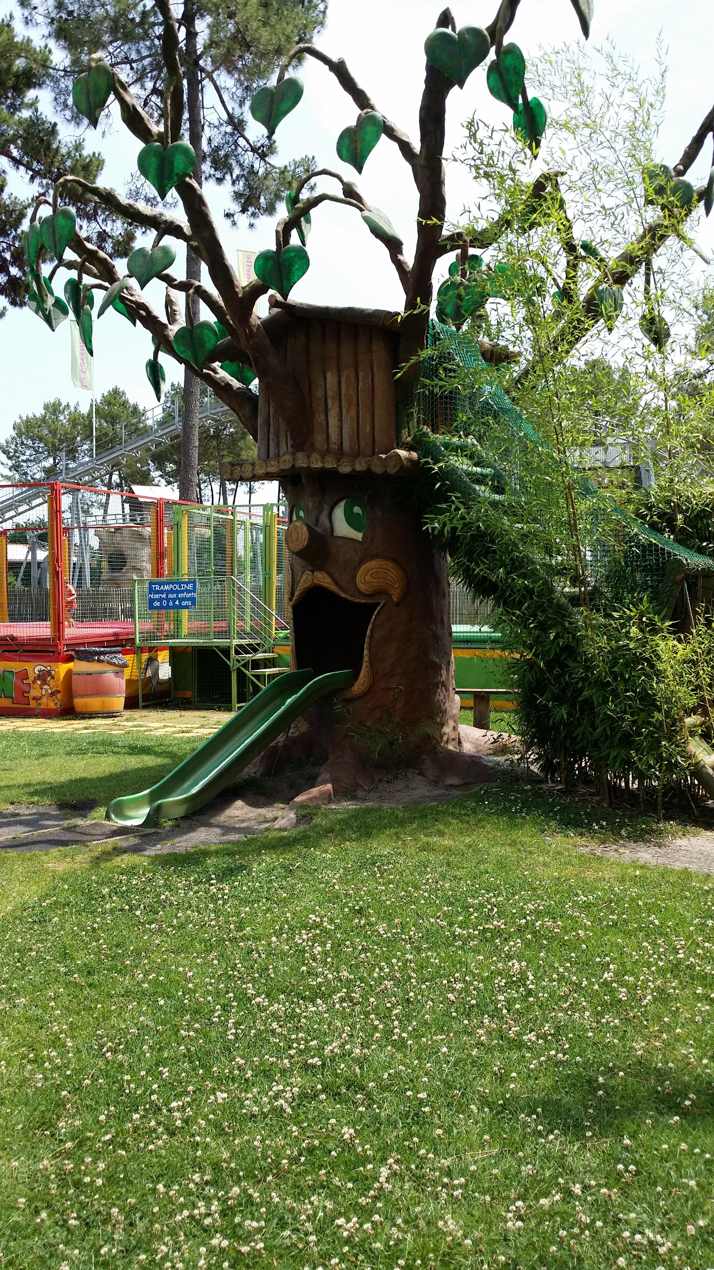 arbre_robinson
