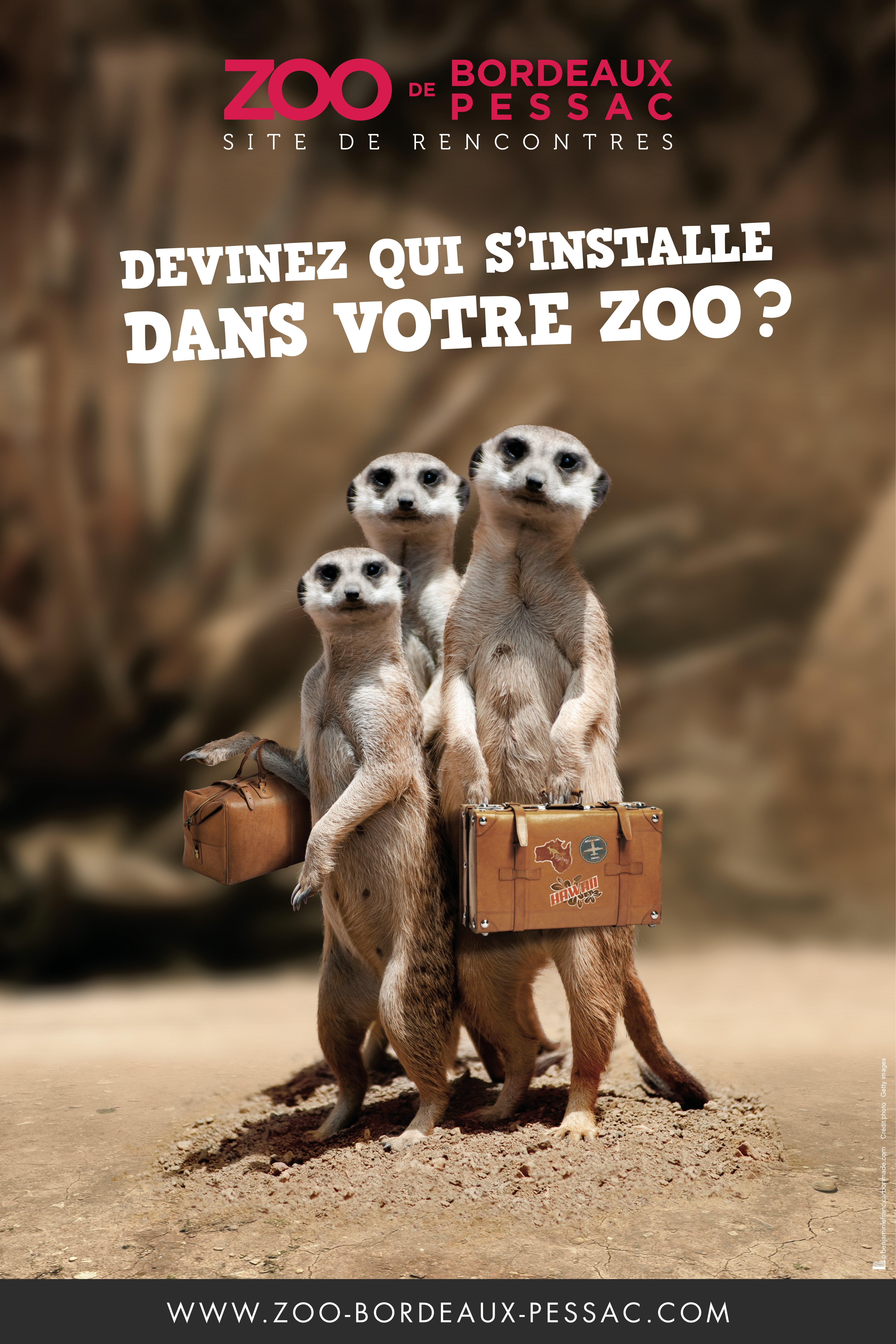 suricates_zoo_pessac